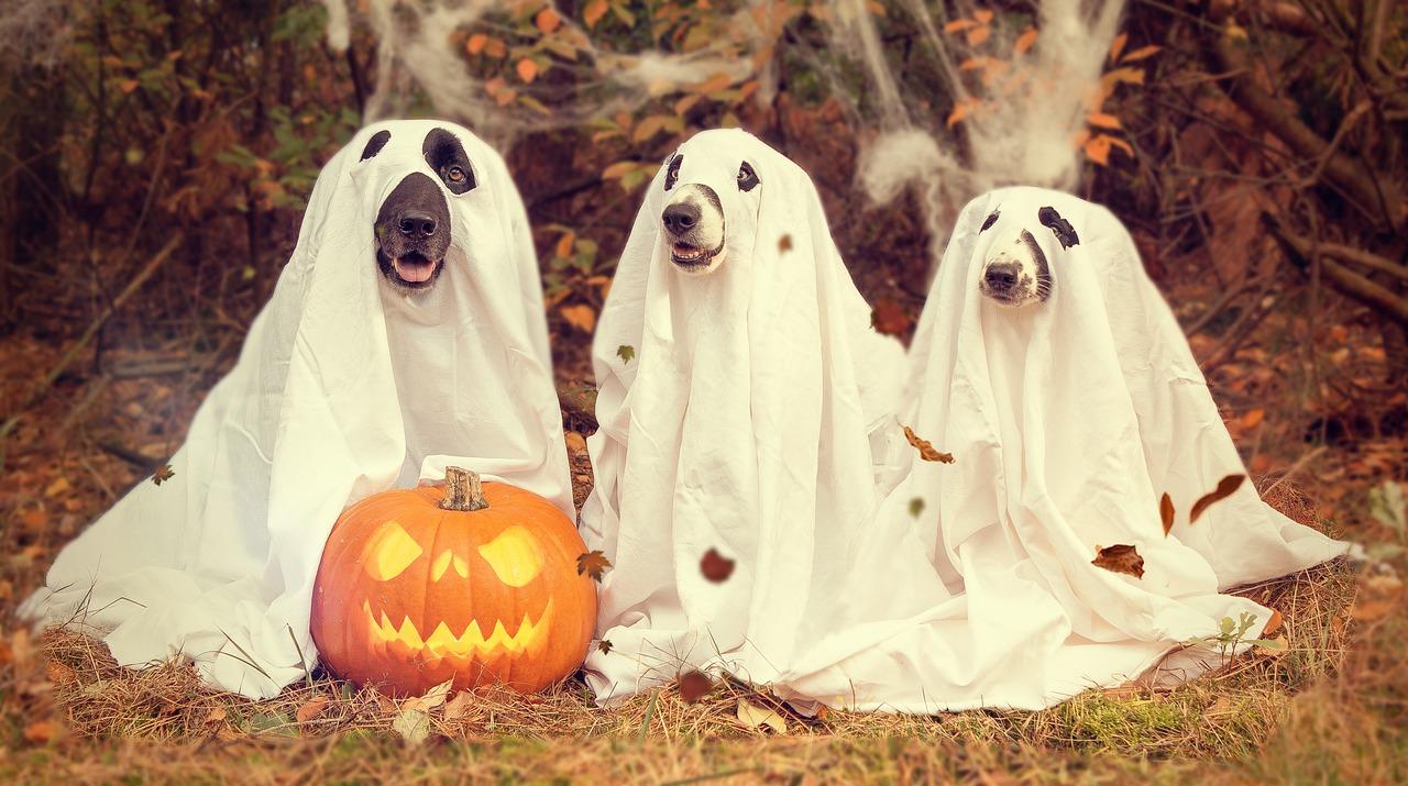 Prepara tu tienda online para halloween, cambia escaparates, publica imágenes atractivas ... e incentiva la venta en este mes de octubre