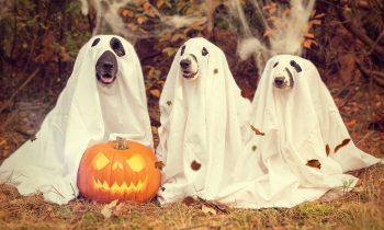 Prepara tu tienda online para Halloween